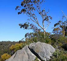 Tree and Boulder, Bungonia Gorge, NSW, Australia by Peter Clements