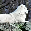 Artic Majestic Wolf  by Poete100