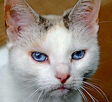 Blue Cat Eyes by Swede
