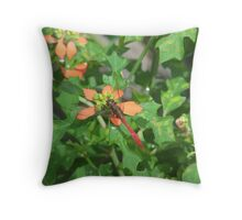 Red Summer Poinsettias  & Red Dragonfly Throw Pillow