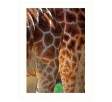 Giraffe Legs and Torsos Art Print