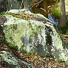 Boulder with lichen by Thad Zajdowicz