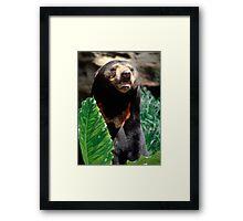 Portrait of a Sun Bear Framed Print