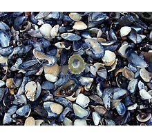 cockles and muscles alive alive oh ... Photographic Print
