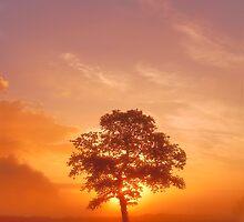 September Sun by Andrew Leighton