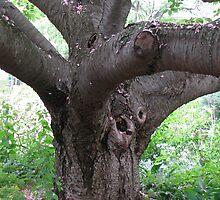 The Old Cherry Tree by Betty Mackey
