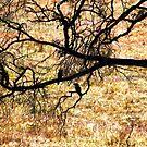 Kookaburras In Silhouette by Asoka