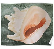 Conch in the Sea Poster