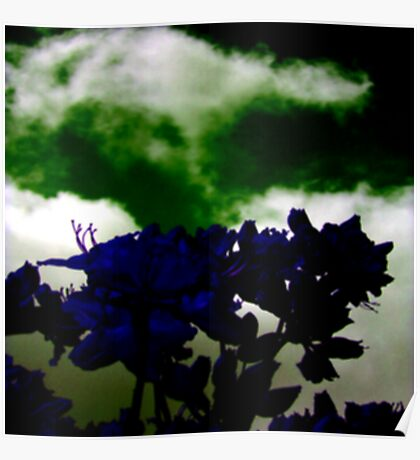 Midnight in the Garden Poster