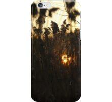 Find the Sun iPhone Case/Skin