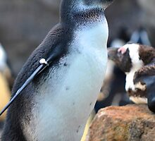 African Penguin  by lgodfroy43