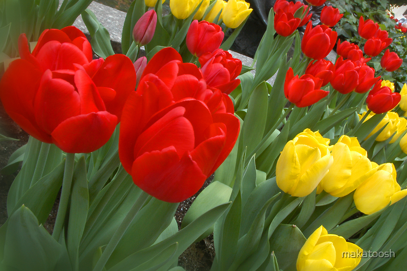 Flowers at Rockefeller by makatoosh