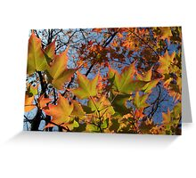 Autumn Sugar Maple Leaves in Full Glory Greeting Card