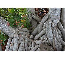Mangrove Puzzles Photographic Print