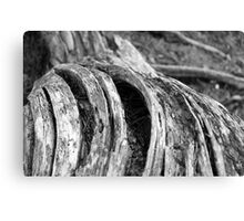 cracks in timber 2 Canvas Print