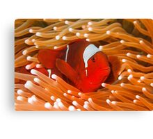 Red-Hot Canvas Print
