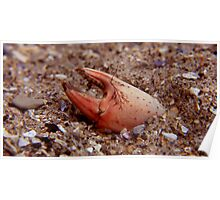 crab claw ... Poster