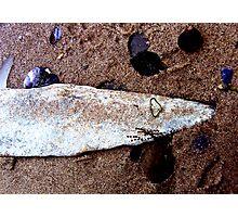 shark on the shore ... Photographic Print