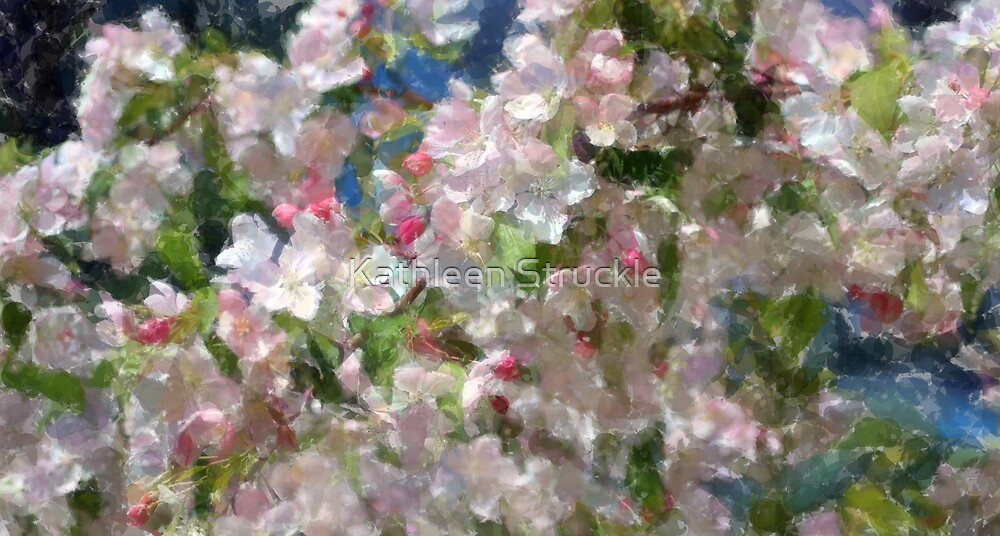 Cherry Blossoms by Kathleen Struckle