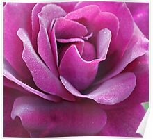 Heart of a Rose, purple Poster