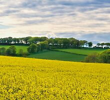 West Lothian Landscape II by Chris Clark