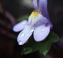 Freezing Winter Morning Dew by cynicown