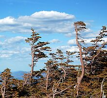 Towering Treeline by Joanne  Bradley