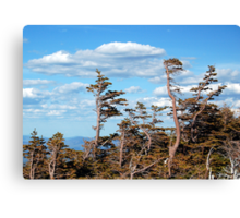 Towering Treeline Canvas Print