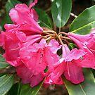 """""""Red Flowers"""" by Lynn Bawden"""