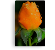 Poppin Peach Canvas Print