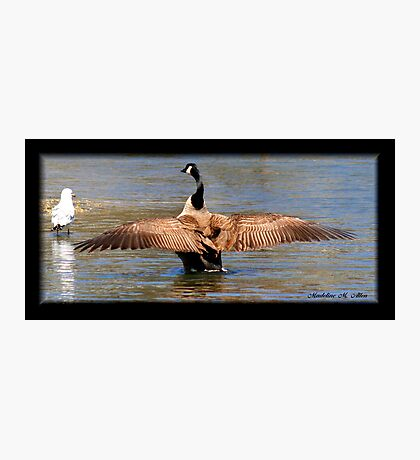 OUT-STRETCHED WINGS Photographic Print