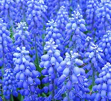 Blue Bells by Shan2112