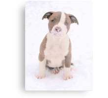 What Is On My Nose Mom? Metal Print