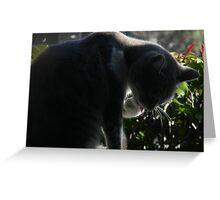 Kat's Twitter Profile Greeting Card