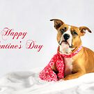 Fifty Shades of Pink - Happy Valentine's Day by Shelley Neff