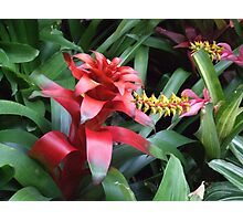 red gift bow Photographic Print