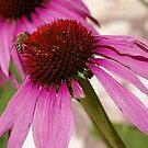 Beautiful Pollination  by Pamela Maxwell
