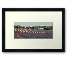Lavendar Farm - Tasmania Framed Print