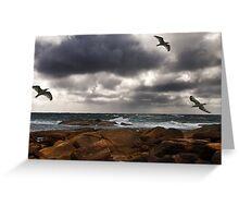 Cape Leeuwin Gulls Greeting Card