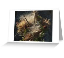 Wild plant series:  Seeding Bull Thistle Greeting Card
