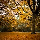 Golden tones in the park by Adrian Jeffs