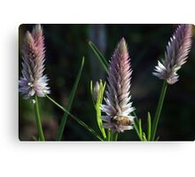 Flowering Onion and Bee Canvas Print