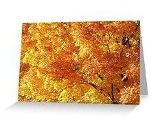 Orange Splendor Greeting Card