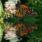 Butterfly Wishes by Rick  Friedle