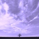 Lone Oak on the horizon by compoundeye