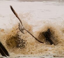 Escape the Surf - Best Viewed Large by Glen Allen