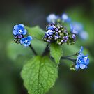 Blossoming flowers by Chris  Parlee
