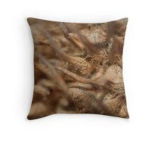 Prickly Ball Close Up Throw Pillow