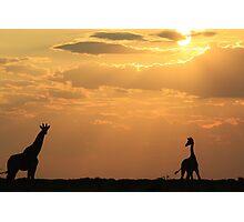 Giraffe Sunset - African Wildlife - Silhouette Pair Photographic Print