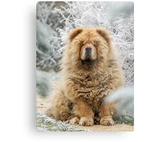 Ms Tea - Chow-Chow Metal Print